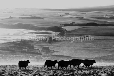 Scapa - Orkney Images