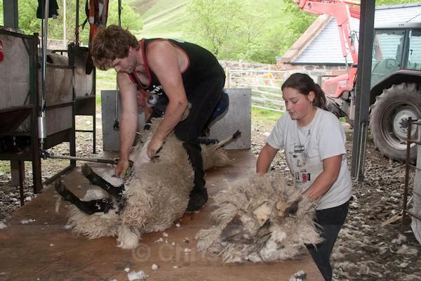 6 - Shearing at Glenwhargen Farm