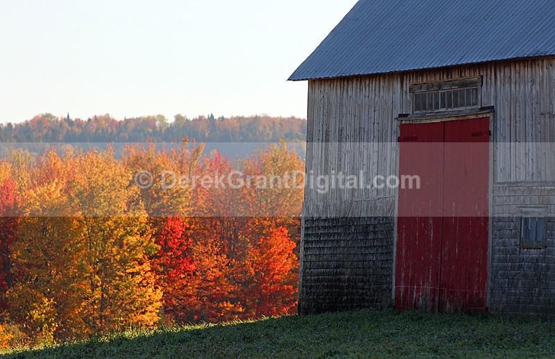 Old Barn Autumn Foliage New Brunswick Canada - New Brunswick Autumn Foliage