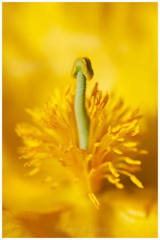 Yellow Horned Poppy Website - Latest Work