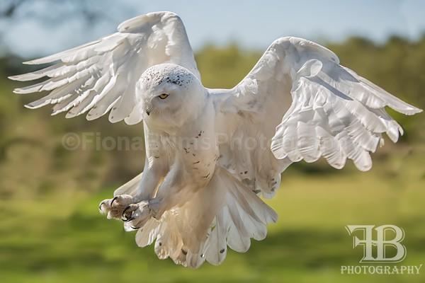 wow may-11 - Birds of Prey