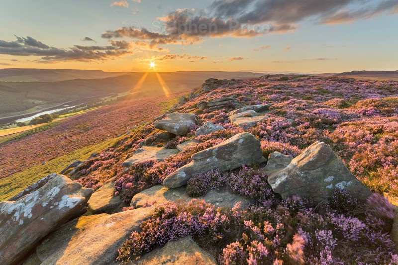 Derwent Edge | Peak District Heather Sunset Photography