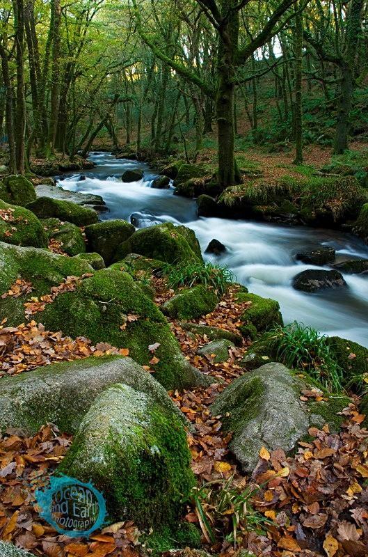 Autumn Woodland II - Landscapes