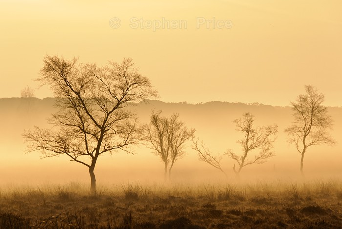 Winter Trees in Mist | Peak District Trees at Dawn