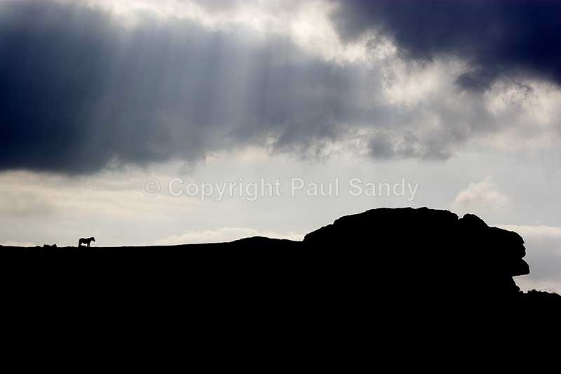 Horse on Saddle Tor, Dartmoor - Featured Images