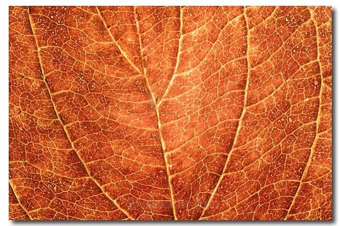 Leaf Macro - Nature