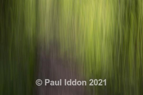 Woods 02 - Creative