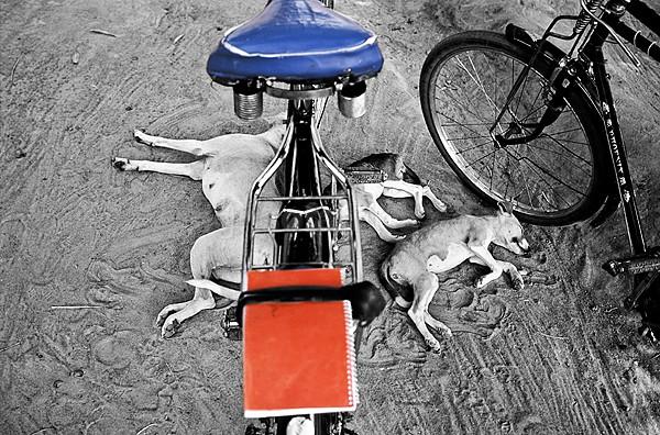 Sleeping Dogs Rumbek Sudan