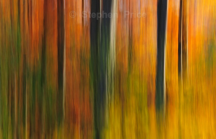 Autumnal Woodland | Abstract Photo of Woods and Leaves