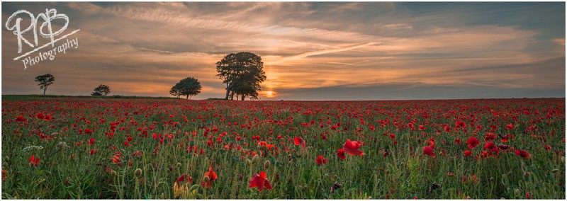 Poppies - Roundway Hill - Wiltshire & West Country Landscapes