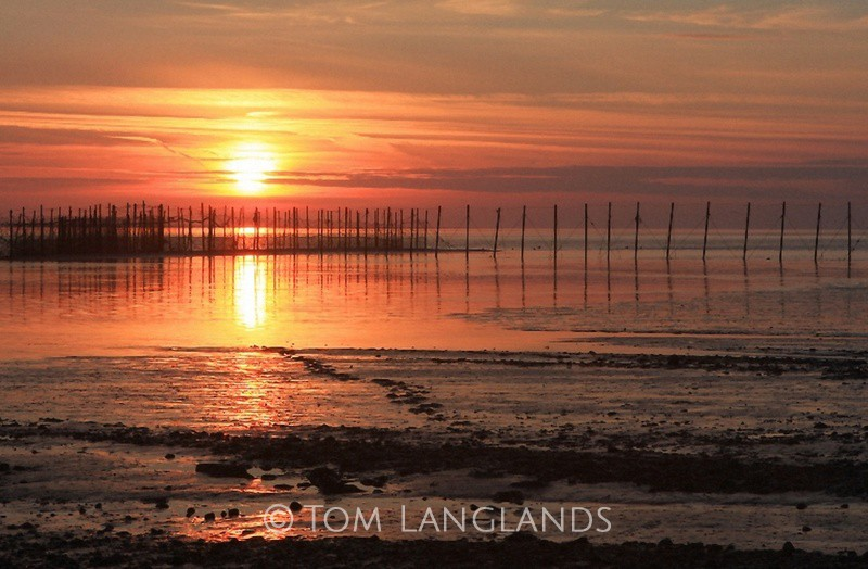 Solway Sunset - Landscapes