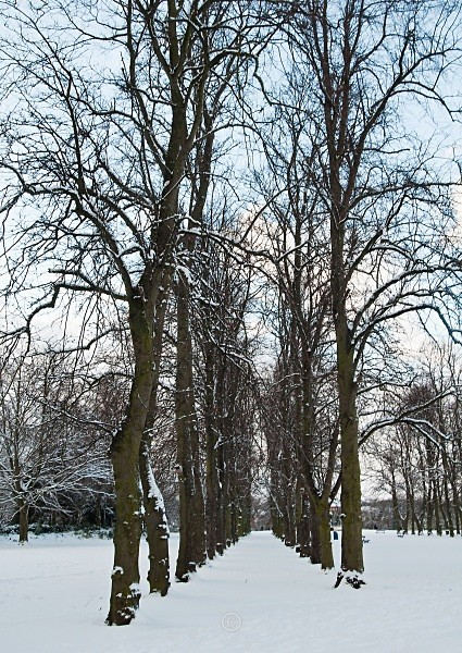 Winter Trees - North-East England