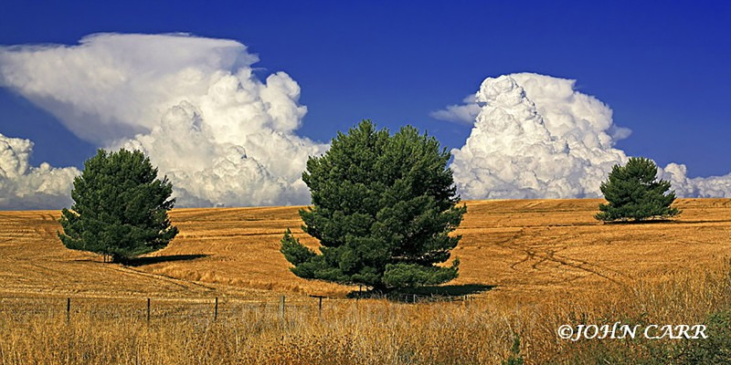 Three Trees and Two Storm Clouds