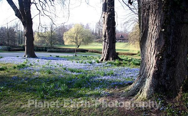 Bluebell Wood - Landscapes / Seascapes