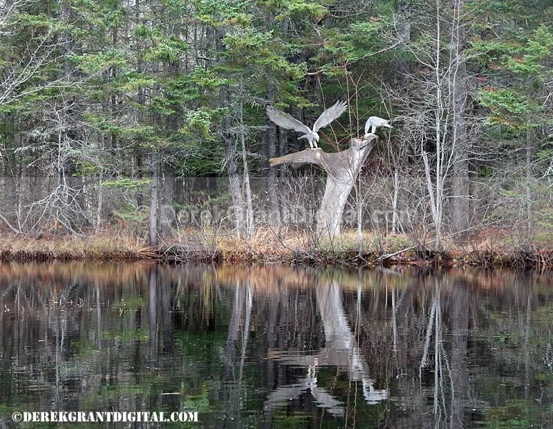 Animaland Sussex New Brunswick Canada - Animaland