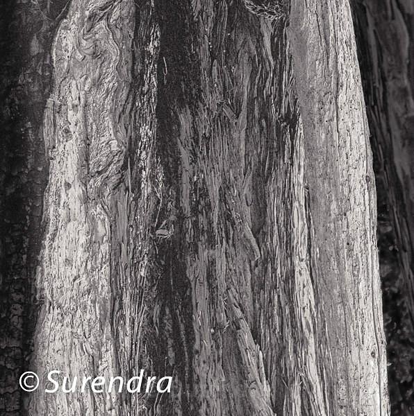 Bark 43 - Bark 2