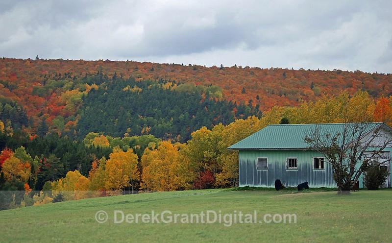 Fall Colors New Brunswick Canada - New Brunswick Autumn Foliage