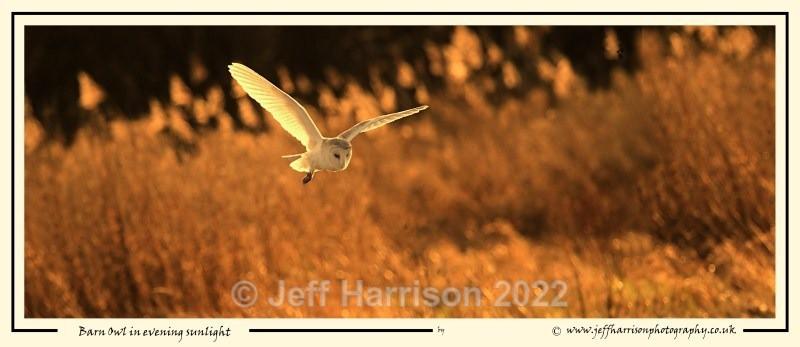 BO 014 - Barn Owls