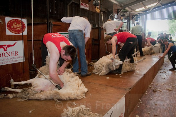 21 - Shearing Competition