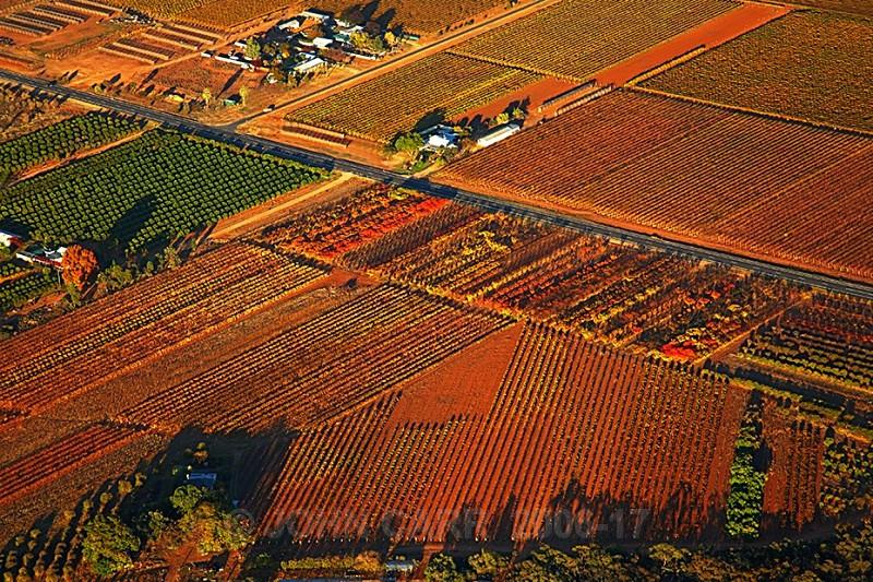 Autumn Vines from a Hot Air Balloon1-3853 - AERIAL PHOTOS