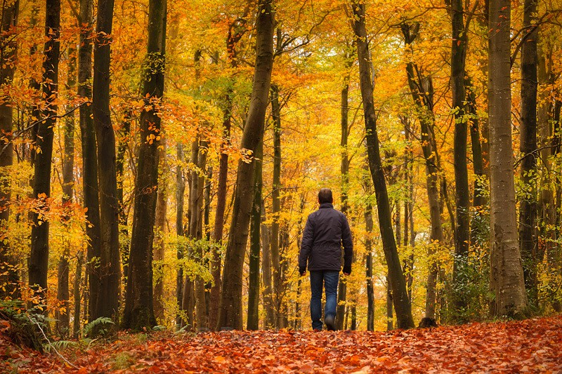 Walking In An Autumn Wonderland - Co. Armagh