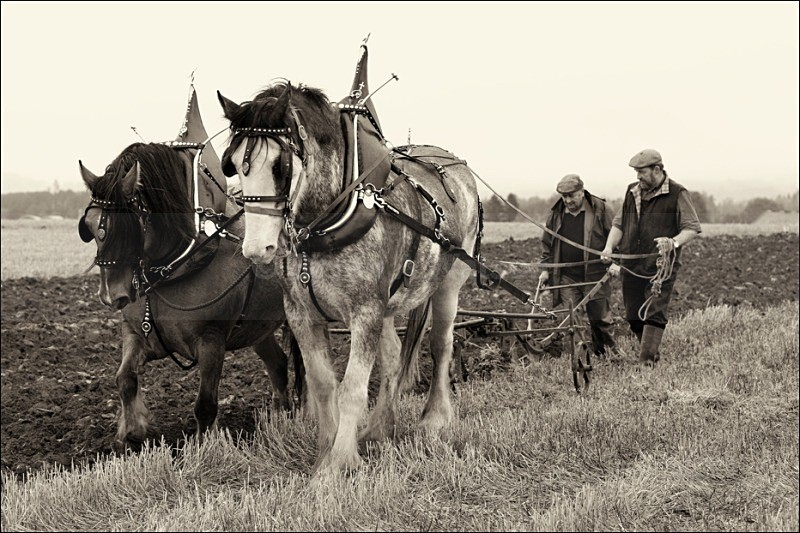 Vintage Ploughing Competition - Flavour of Aberdeenshire