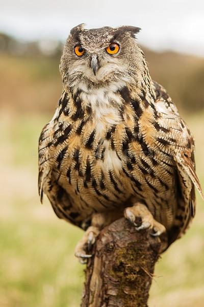 wow apr pd-5 - Birds of Prey