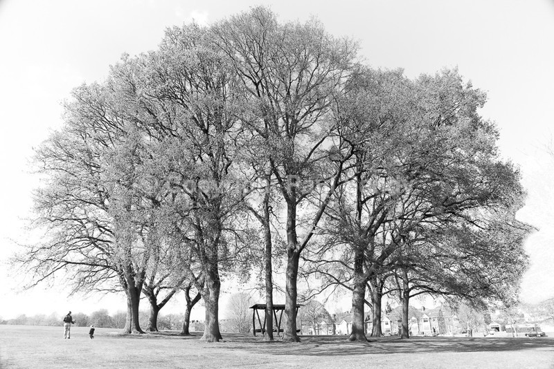 Playing in the park, Heavitree Pleasure Grounds, Exeter - Seeing the Wood AND the Trees