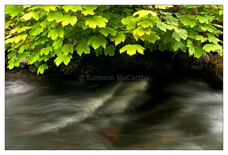 river leaves - 2010 Images