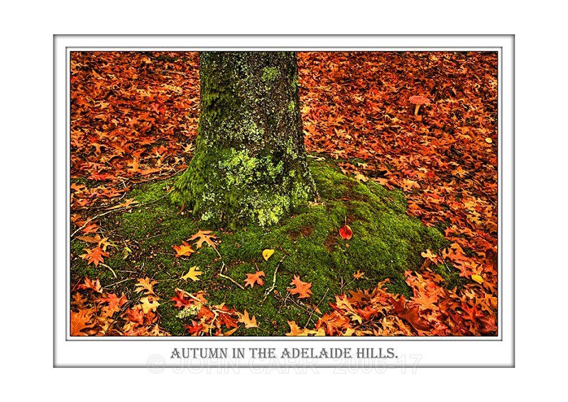 Beautiful Wall Art print  with a Border, showing a Tree Trunk, Autumn Leaves and Fly Agaric Toadstool, South Australia.