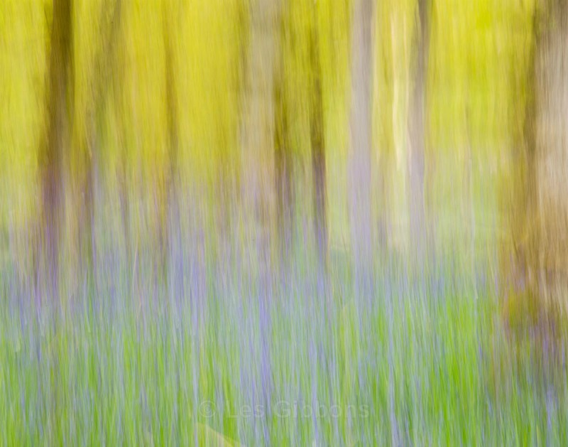colours of spring - Perthshire