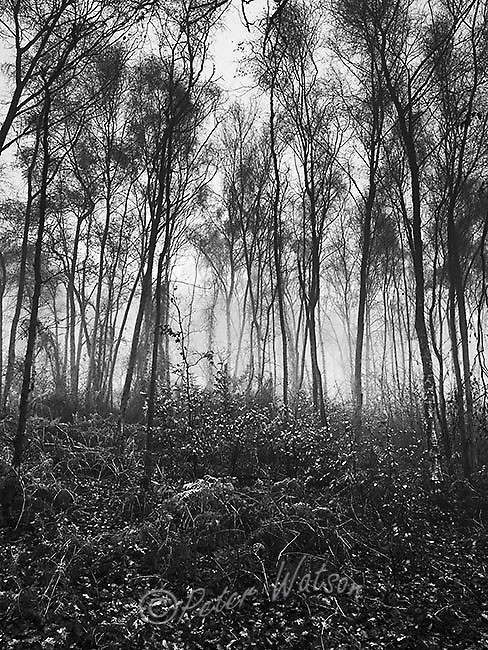 Storeton Woods Wirral England - Monochrome