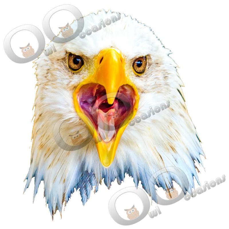 bald eagle Haliaeetus leucocephalus-745 - BoP from around the world