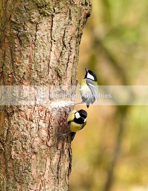 - Eskrigg Nature Reserve Lockerbie