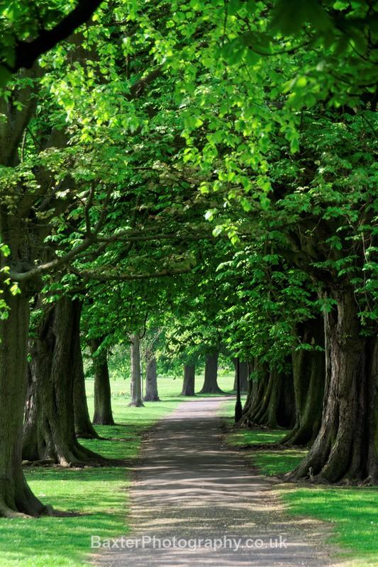 The Avenue Of Trees - Harrogate Town