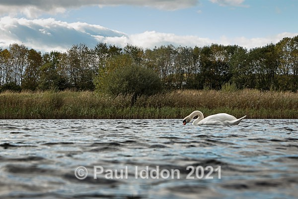 Brockholes 12 - Landscapes