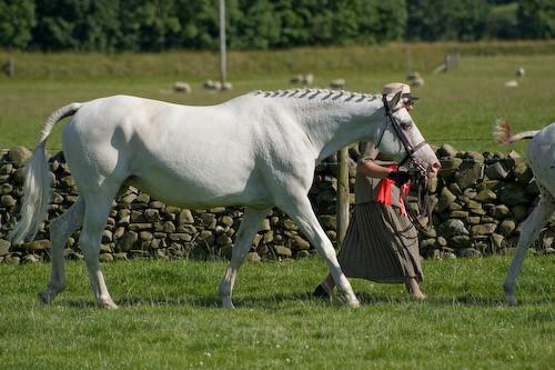 159 - Moniaive Horse Show 2008