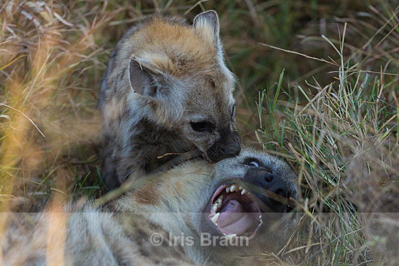 Playtime - Hyena