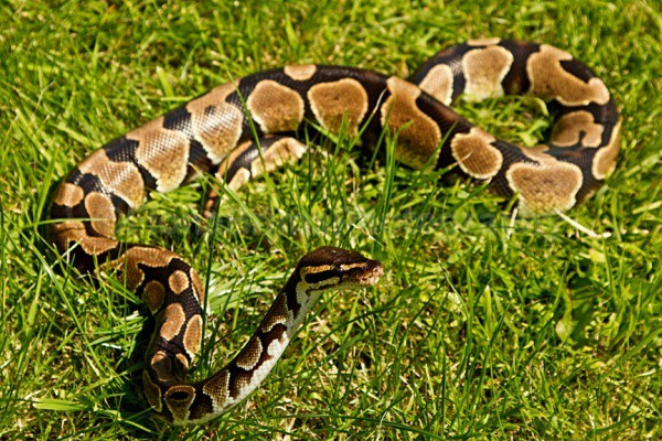 snakes-10-2 - Reptile Photography