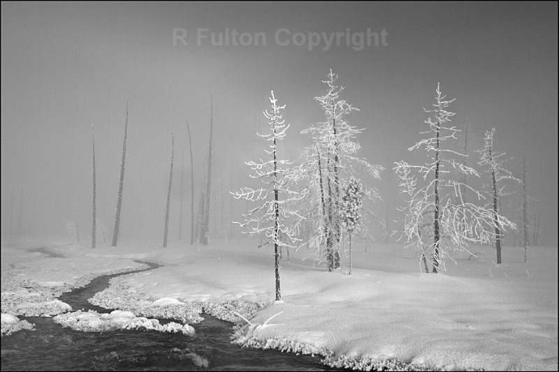 Light  Shade Mono - Yellowstone