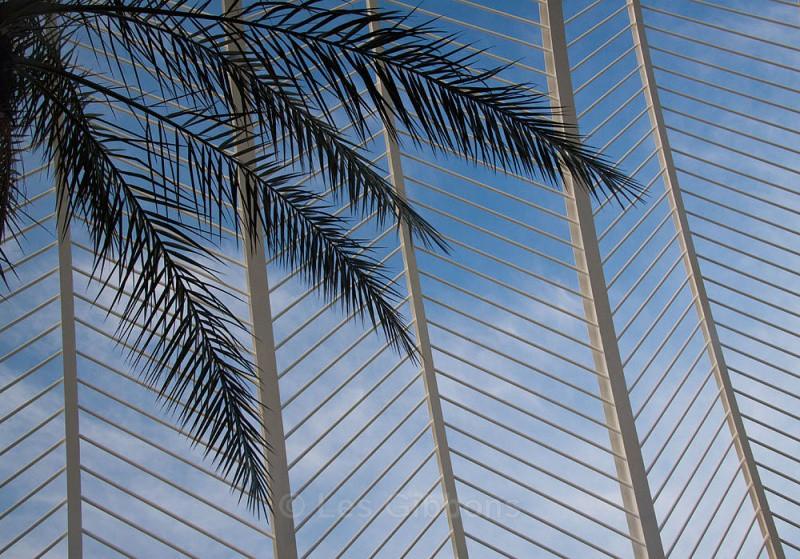 palms2 - Valencia