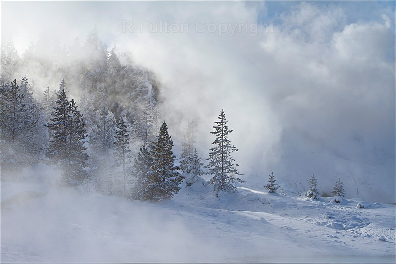 Misty Trees - Yellowstone