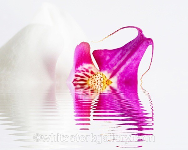 The Melting Orchid - Digital Art
