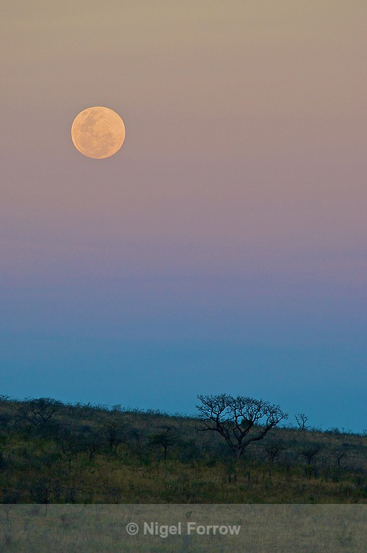 African Moonrise - South Africa
