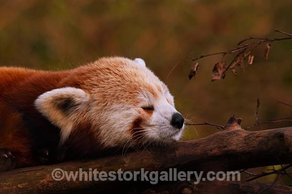 Sleepy Head! - Wildlife and Animals