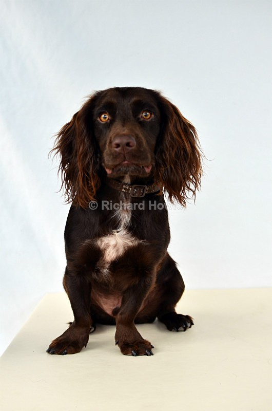 RAH_4175 - Pet Photography