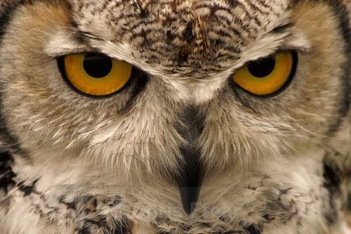 Inca - Close Up - Animals/ Wildlife