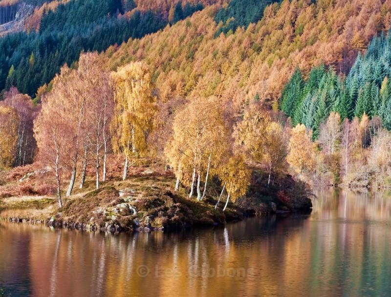 Loch Tummel trees3 - Perthshire