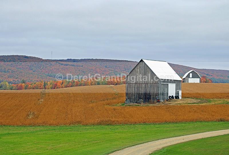 Two Barns _ Autumn in New Brunswick Canada Fall Foliage - New Brunswick Autumn Foliage