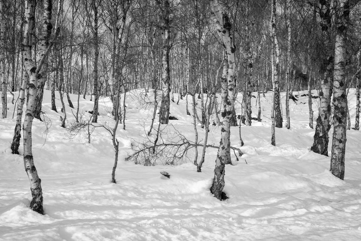 Silver lined blanket - WINTER